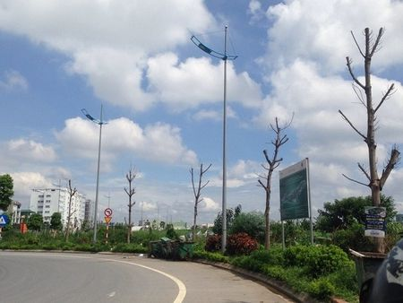 Ha Noi: Hang loat cay xanh khong con 'suc song' tren duong nghin ti - Anh 1