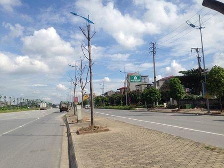 Ha Noi: Hang loat cay xanh khong con 'suc song' tren duong nghin ti - Anh 4