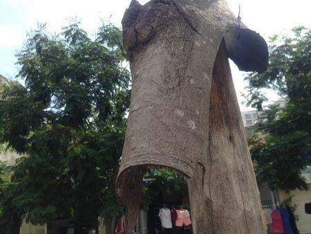 Ha Noi: Hang loat cay xanh khong con 'suc song' tren duong nghin ti - Anh 7