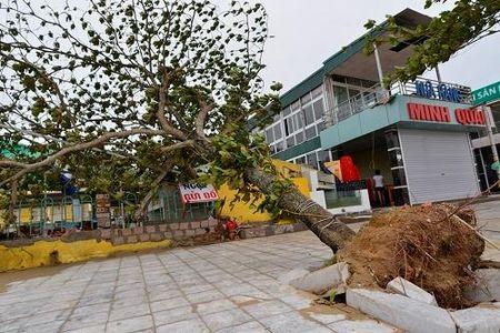 Bao so 2 qua Thanh Hoa: Cay xanh bat goc, nha hang do sap - Anh 2