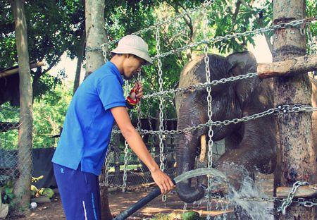 Mot ngay tai Trung tam bao ton voi Dak Lak - Anh 1