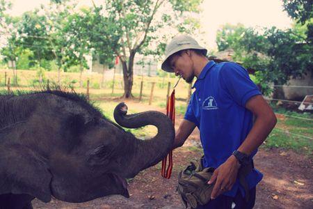 Mot ngay tai Trung tam bao ton voi Dak Lak - Anh 2