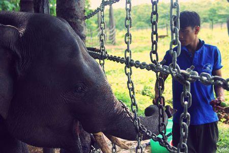 Mot ngay tai Trung tam bao ton voi Dak Lak - Anh 3