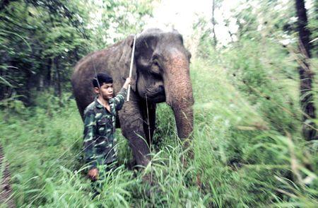 Mot ngay tai Trung tam bao ton voi Dak Lak - Anh 7