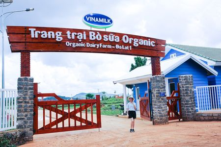 Trang trai bo sua Organic o Da Lat dat tieu chuan Chau Au lan dau tien don khach - Anh 1