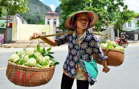 Mang cau Chi Lang nhon nhip vao mua thu hoach - Anh 8
