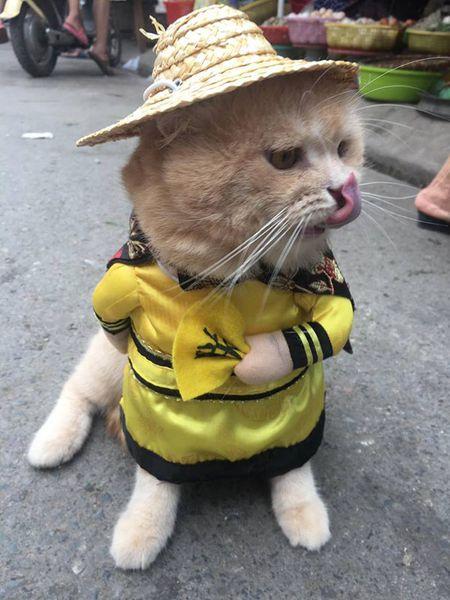Meo cosplay ra hang thit ngoai cho, 'mat gian' vi them va day la phan ung cua cac tieu thuong - Anh 1