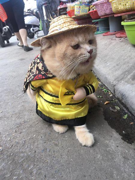 Meo cosplay ra hang thit ngoai cho, 'mat gian' vi them va day la phan ung cua cac tieu thuong - Anh 2