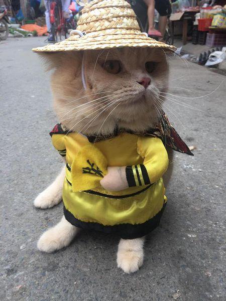 Meo cosplay ra hang thit ngoai cho, 'mat gian' vi them va day la phan ung cua cac tieu thuong - Anh 6