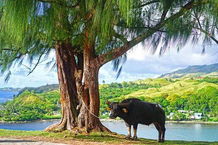 Guam - thien duong du lich 'bat dac di' noi danh the gioiGuam - thien duong du lich 'bat dac di' noi danh the gioi - Anh 1