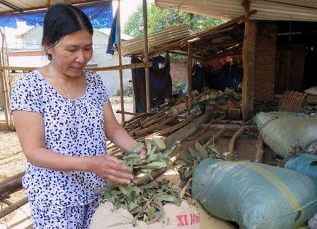 Nguoi phu nu lam giau tu cay que Tien Phuoc - Anh 1