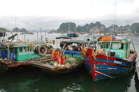 Lien tiep bat giu cac vu khai thac hai san trai phep tren vung bien Quang Ninh - Anh 2