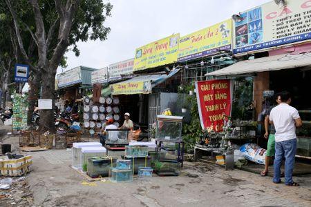 Dong loat xa hang truoc ngay tra dat quoc phong o Tan Son Nhat - Anh 6