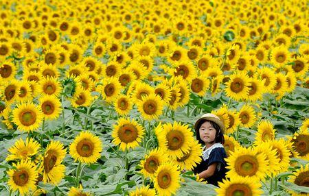 Du khach un un keo den lang hoa huong duong dep sung so o Han Quoc - Anh 3