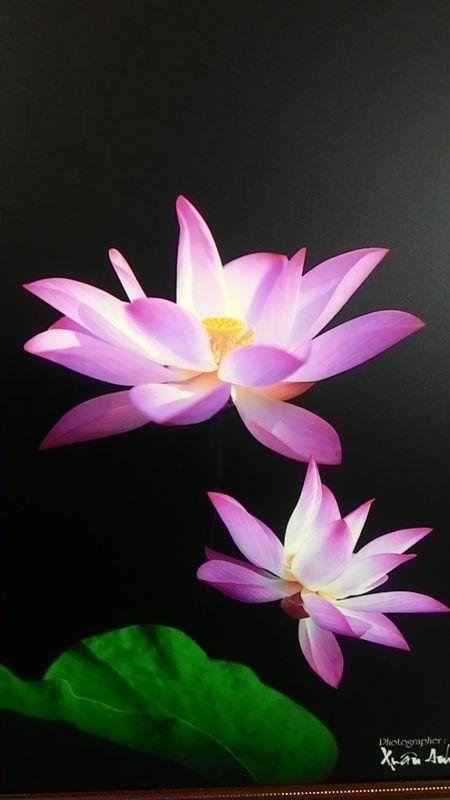 NS Xuan Anh tri an cong duc sinh thanh de lam tu thien - Anh 9