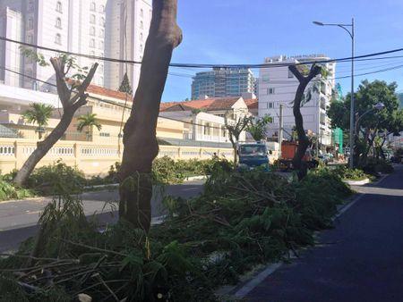 TP Nha Trang dao hang loat cay xanh mo rong duong - Anh 1