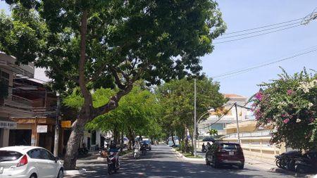 TP Nha Trang dao hang loat cay xanh mo rong duong - Anh 3