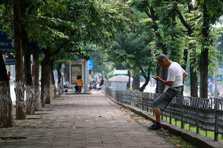 Hang cay co thu tren duong Kim Ma truoc ngay di doi - Anh 11