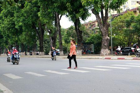 Hang cay co thu tren duong Kim Ma truoc ngay di doi - Anh 5