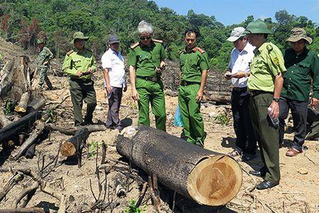 """Hon 43ha rung tai An Lao """"boc hoi"""": Cong an Binh Dinh cam ket ho tro dieu tra - Anh 1"""