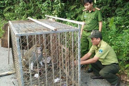 TP.Da Nang: Tha khi ve tu nhien tren ban dao Son Tra - Anh 1
