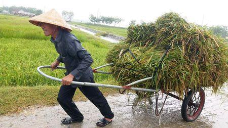 Mien Trung hoi ha ra khoi nha chong Bao so 10 - Anh 4