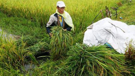 Mien Trung hoi ha ra khoi nha chong Bao so 10 - Anh 5