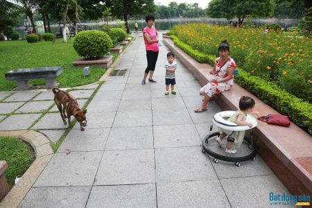 'Chung cu cao tang la de nguoi o, khong phai cho cho cho meo!' - Anh 1