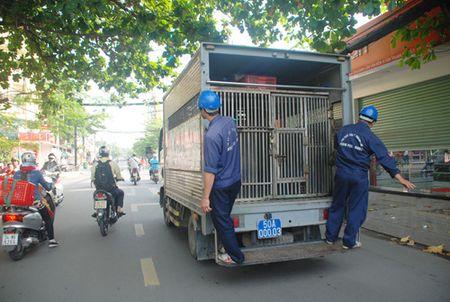 Xe bat cho 'gia' xuat hien: Cong an Binh Tan chinh thuc len tieng - Anh 2