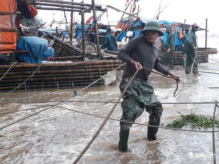 Thanh Hoa: Nguoi dan dam mua keo be tranh bao - Anh 1
