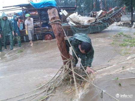 Thanh Hoa: Nguoi dan dam mua keo be tranh bao - Anh 8