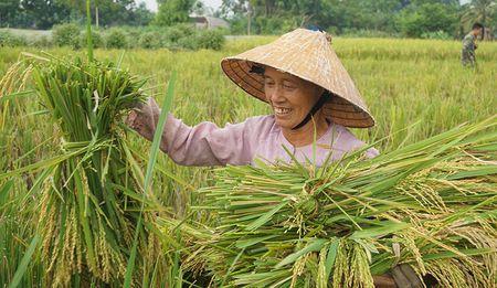 Bo doi gat lua chay bao giup dan - Anh 7