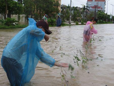 Quang Binh: Sinh vien nuoc ngoai xuong pho tung chai bat ca 'khung' sau bao - Anh 1