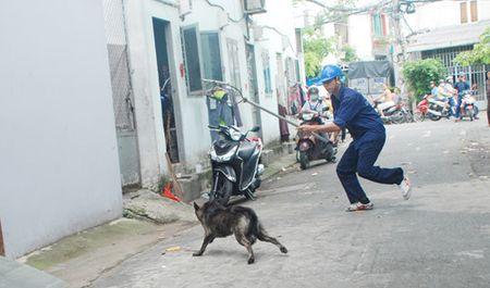 Bat cho chay rong, xu phat theo Nghi dinh tu hom nay: Chu meu mao xin 'tha' - Anh 2