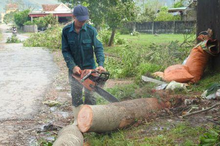 Quang Binh tan hoang sau bao so 10 - Anh 16