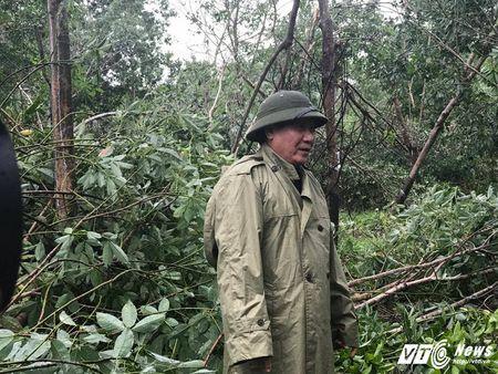 Dau xot nhin hang nghin hecta rung cao su sap thu hoach o Quang Tri bi bao quat do - Anh 10
