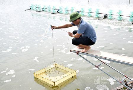 Sau bao nguoi dan Hoang Mai khac phuc vung nuoi tom ngap nuoc - Anh 2