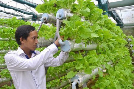 Nguoi dau tien trong rau thuy canh o Phu Quoc - Anh 1