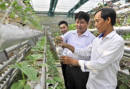 Nguoi dau tien trong rau thuy canh o Phu Quoc - Anh 7