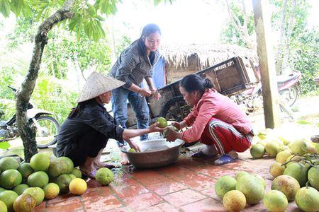 Bao so 10 tan pha 400 ha buoi Phuc Trach, thiet hai hang ti dong - Anh 3