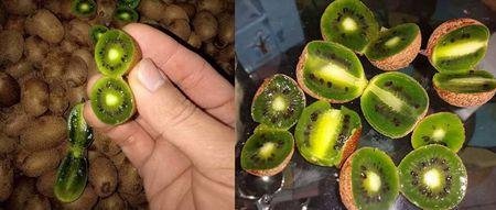 Nhin da chay nuoc mieng, chi em tranh mua kiwi ti hon 1 trieu/kg - Anh 4