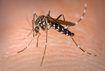 Chuyên gia vạch rõ hiểu lầm chết người về 'thủ phạm' gây bệnh sốt xuất huyết