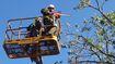 Công ty cây xanh Hà Nội hỗ trợ Quảng Bình khắc phục hậu quả bão số 10