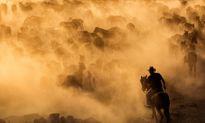 Cảnh cao bồi lùa ngựa trên thảo nguyên đẹp như phim