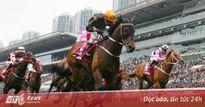 Có gì trong trường đua ngựa 100 triệu USD đầu tiên ở Việt Nam?