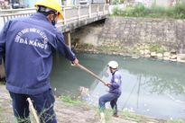 Tái diễn tình trạng cá chết trên kênh thoát nước ở Đà Nẵng