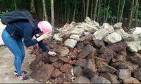 Đồng Nai: Hàng ngàn tấn chất thải đổ trộm giữa rừng tràm