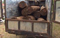 Đắk Lắk: Lâm tặc bỏ xe gỗ quý chạy thoát thân
