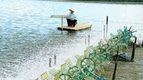 Thành lập Khu nông nghiệp ứng dụng công nghệ cao phát triển tôm Bạc Liêu