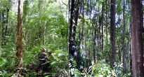 Gian nan cuộc chiến giữ rừng:Giữ rừng trên đỉnh Chư Mom Ray